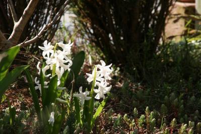 2010-03-27_06.jpg