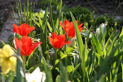 2010-04-04_58.jpg