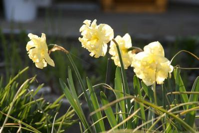 2010-04-04_60.jpg