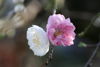 2010-04-04_76.jpg
