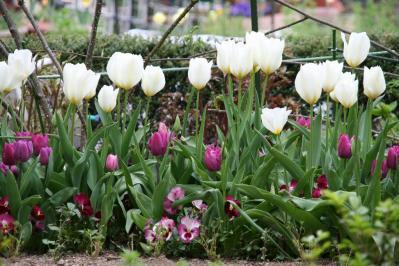 2010-04-10_51.jpg