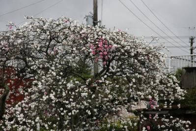 2010-04-11_30.jpg