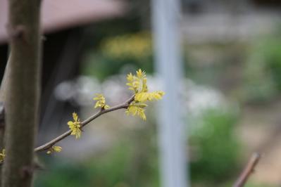 2010-04-15_29.jpg
