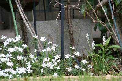 2010-04-18_07.jpg