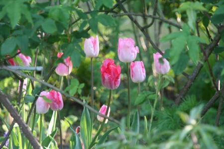 2010-04-25_62_20110129141202.jpg