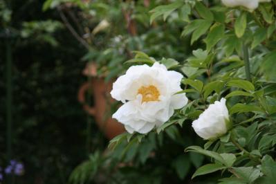 2010-05-03_85.jpg