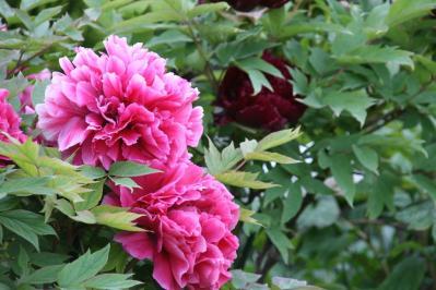 2010-05-03_87.jpg