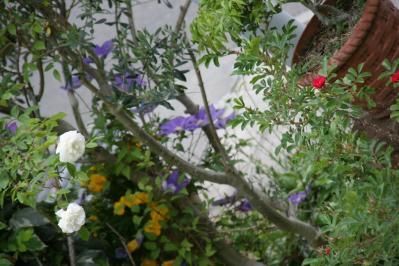 2010-05-12_25.jpg