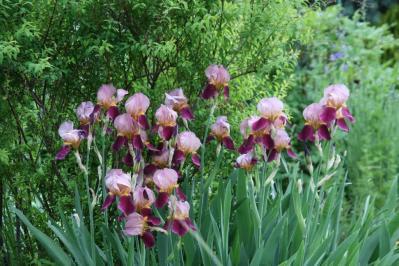 2010-05-14_82.jpg