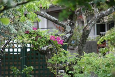 2010-05-16_14.jpg
