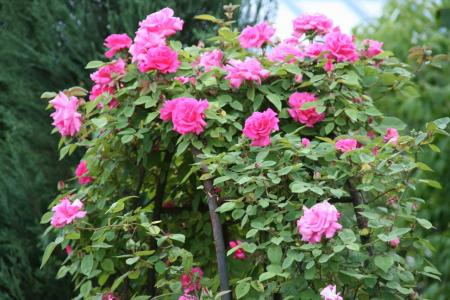2010-05-17_36_20110204190657.jpg