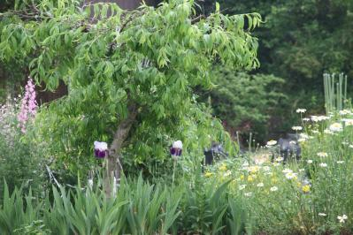 2010-05-20_37.jpg