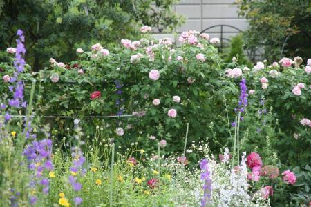 2010-05-25_47_20110204174551.jpg