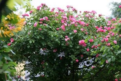 2010-05-26_84.jpg
