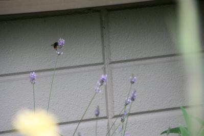 2010-07-02_59.jpg