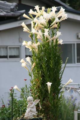 2010-07-26_37.jpg