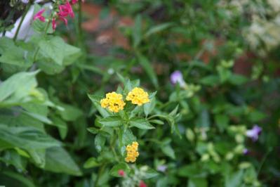 2010-08-23_00.jpg