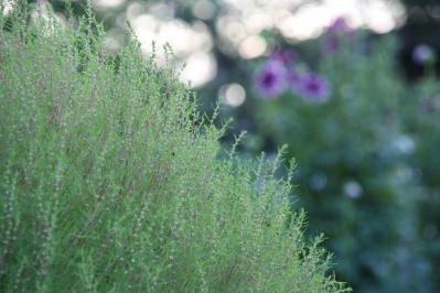 2010-09-05_09.jpg
