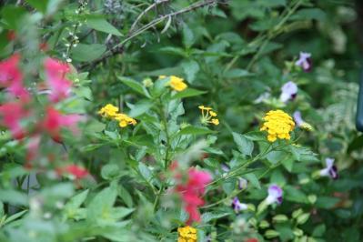 2010-09-07_17.jpg