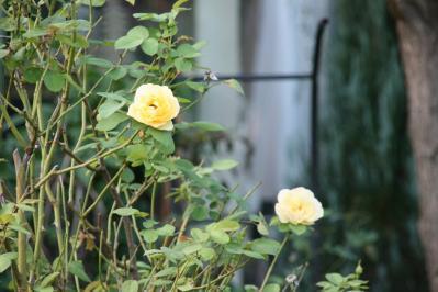 2010-10-06_19.jpg