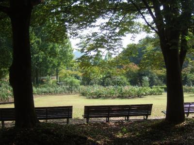 2010-10-14_01.jpg