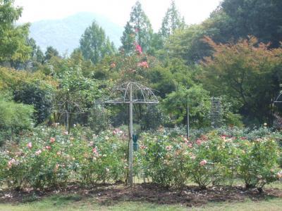 2010-10-14_04.jpg