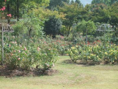 2010-10-14_05.jpg