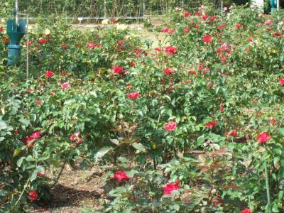 2010-10-14_07.jpg