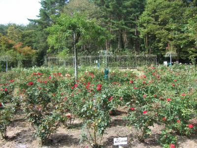 2010-10-14_08.jpg