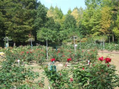 2010-10-14_10.jpg