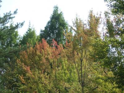 2010-10-14_15.jpg