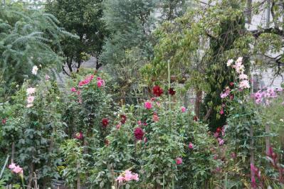 2010-10-20_27.jpg