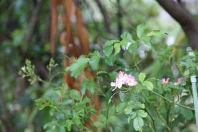 2010-10-23_29_20101027172548.jpg