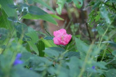 2010-10-27_19_20101027172546.jpg