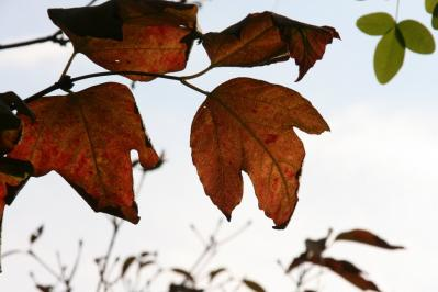 2010-11-16_03.jpg