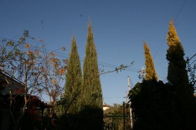 2010-12-04_15.jpg