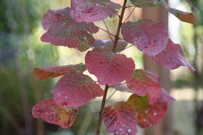 2010-12-09_00.jpg