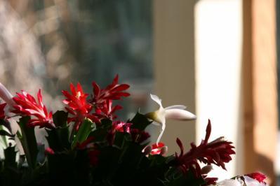 2010-12-17_30.jpg