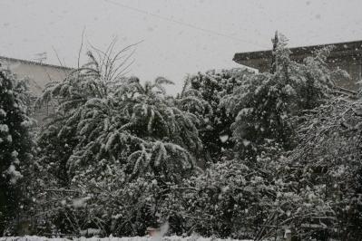 2010-12-30_52.jpg