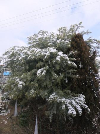 2011-01-10_03.jpg