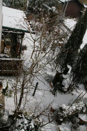 2011-01-16_01.jpg