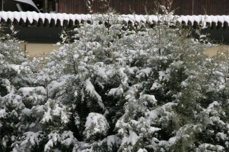 2011-01-16_05.jpg