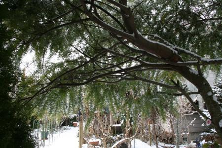 2011-01-16_12.jpg