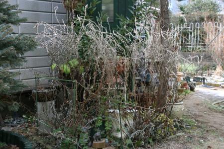 2011-01-22_08.jpg