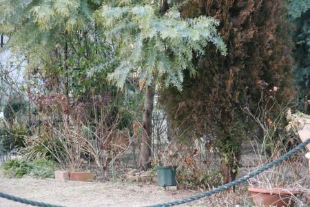 2011-01-24_03.jpg