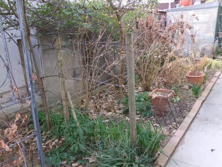 2011-01-29_11.jpg