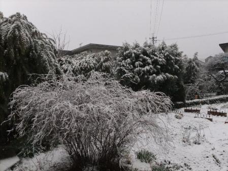 2011-02-14_02.jpg