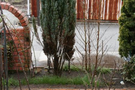 2011-02-20_18.jpg