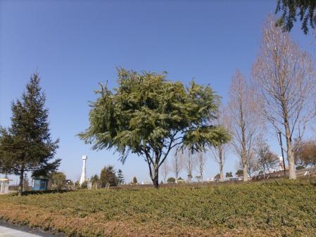 2011-02-22_06.jpg