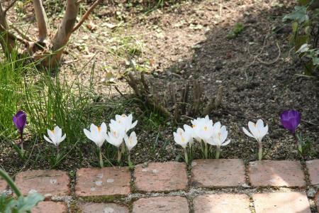 2011-03-19_04.jpg